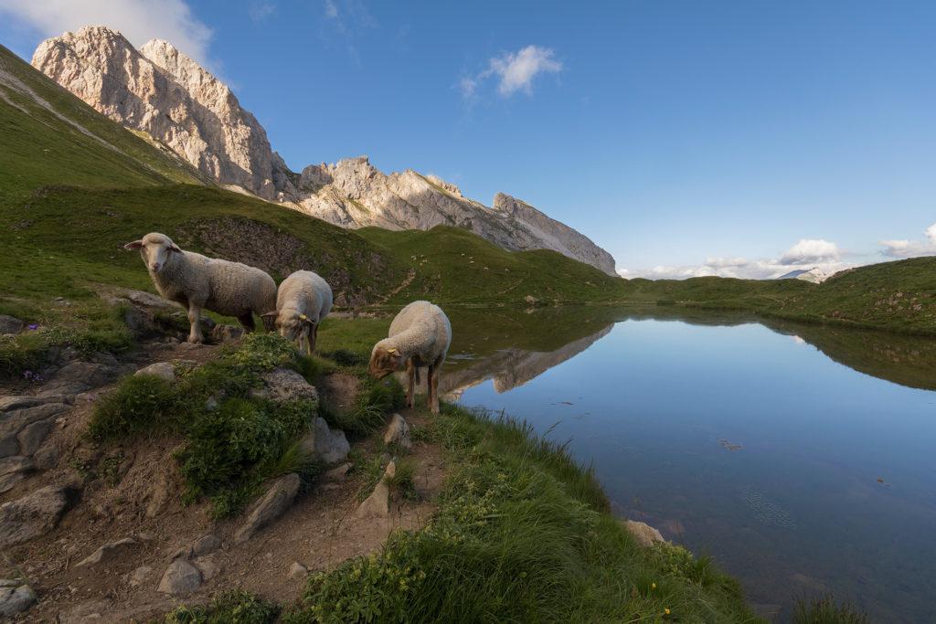 Lac de Peyre - C.Cattin-Alpcat - 001 - 1920px